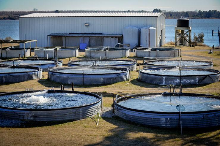 Аквакультура - установки для выращивания рыбы