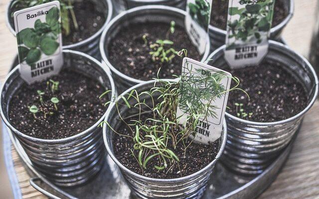 выращивание растений в помещении