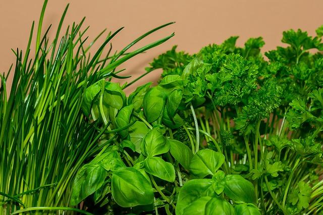 микрозелень на гидропонике