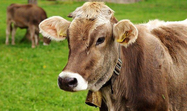 гидропонная зеленая трава для скота