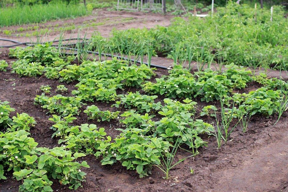 расположение растений в саду