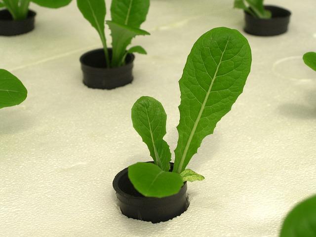 гидропонный сад своими руками
