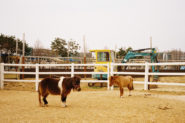 миниатюрный скот