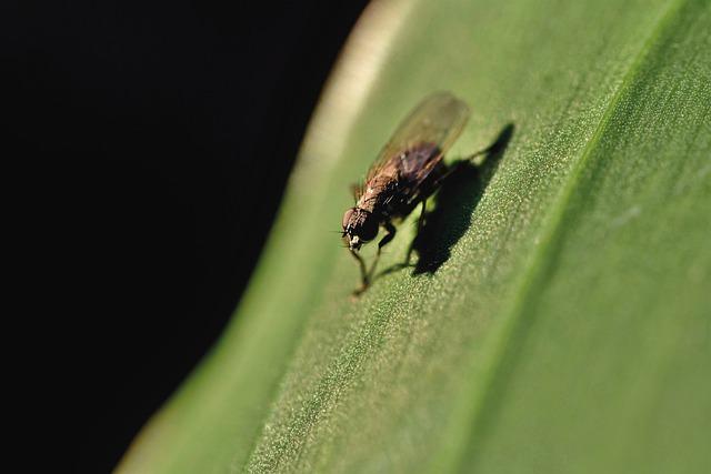 колонии насекомых