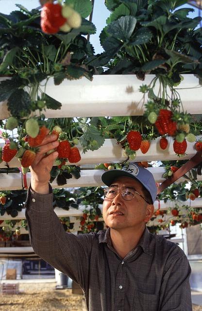 фрукты на гидропонике