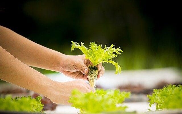 Гидропонный способ выращивания растений