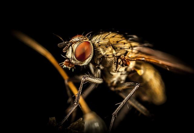 разведние насекомых вредителей