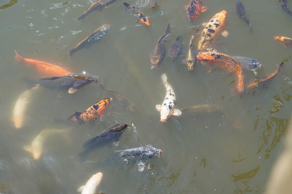 рыба в узв