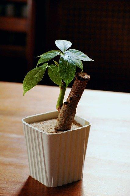 выращивание растений в опилках и песке