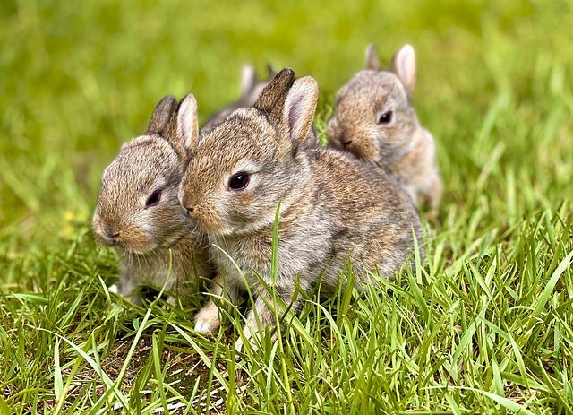 уход зя крольчатами