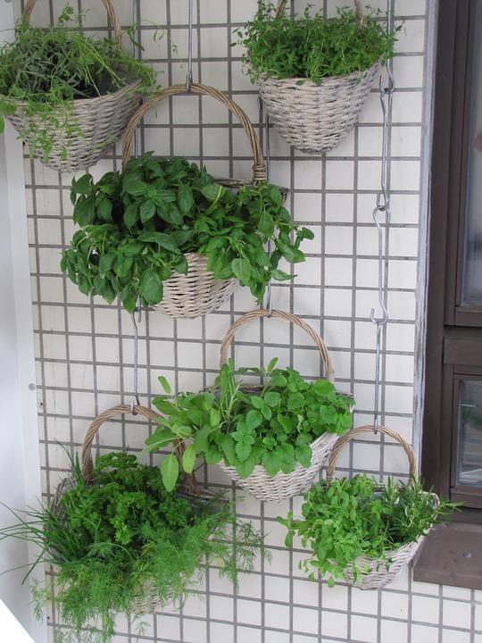 Выращивание съедобных трав в горшках