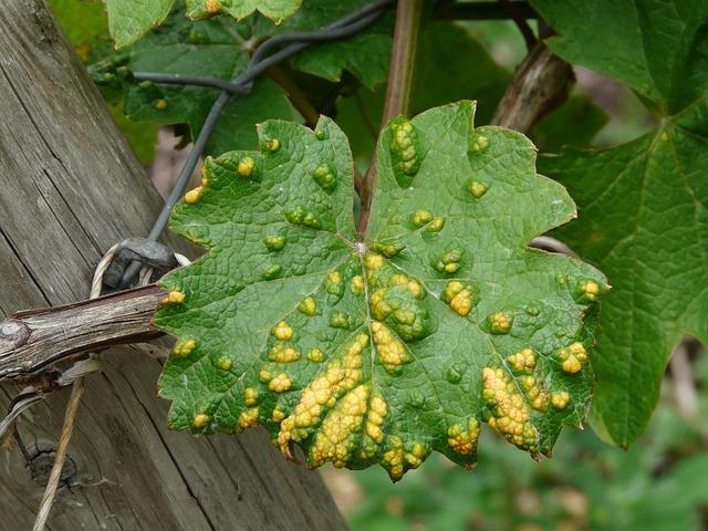 ржавые пятна на листьях