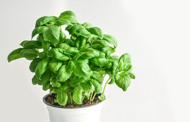 выращивание микрозелени