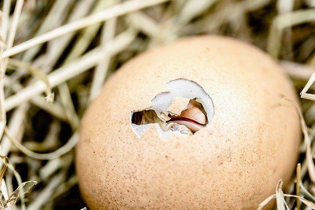 пространство для оплодотверенных яиц