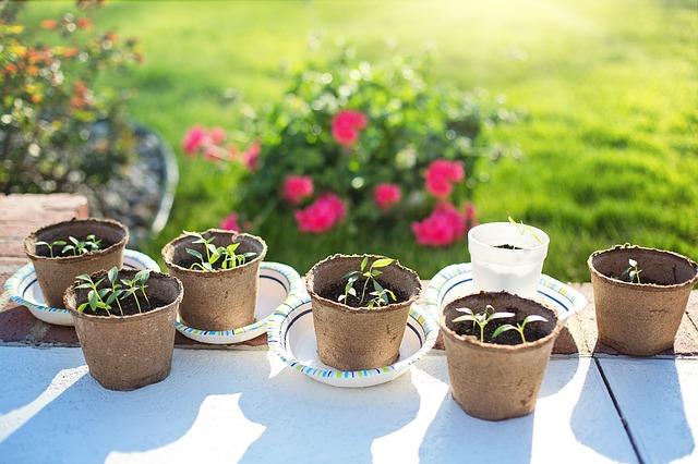 питательный раствор для растений